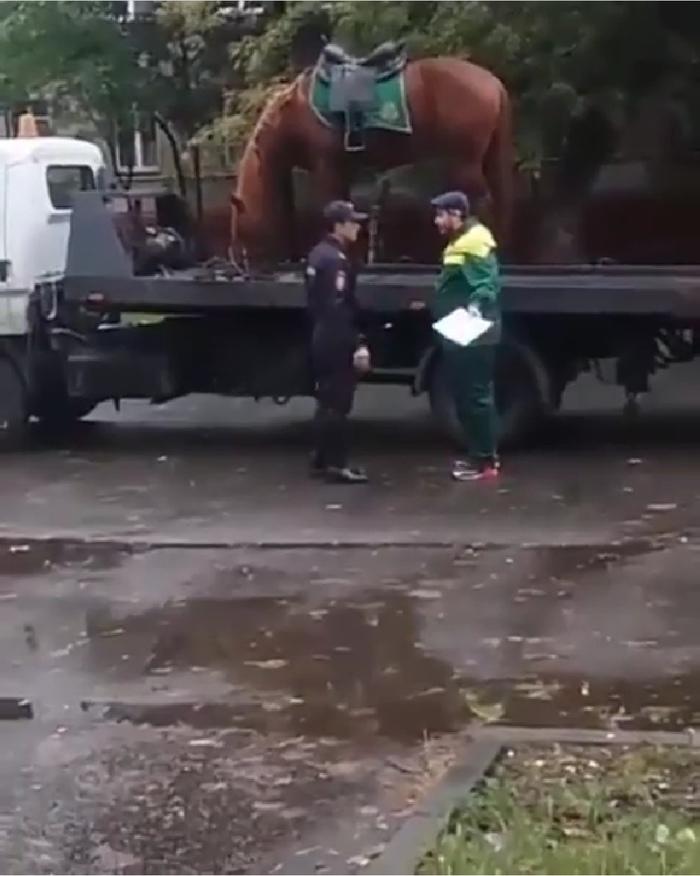 В Казани эвакуировали лошадь Лошади, Эвакуатор, Полиция, Казань, Съемки