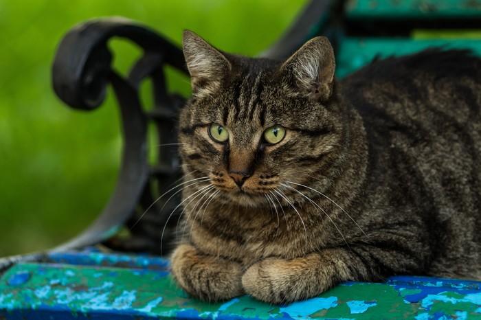 Уличные котики, часть 1. Кот, Животные, Улица, Город, Фотография, Грусть, Canon, Глаза, Длиннопост
