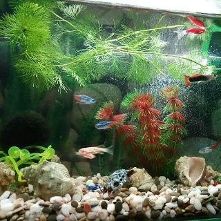 Реновация аквариума (до и после) Моё, Без рейтинга, Аквариум, Аквариумные рыбки, Гифка