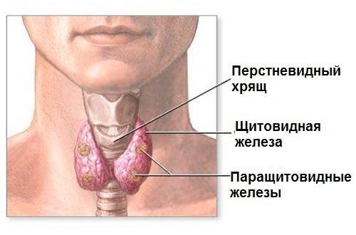 Простая непростая эндокринология [2]. Медицина, Длиннопост, Щитовидная железа