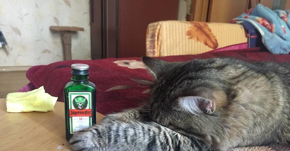 функция пьющий кот горе в семье картинка вам