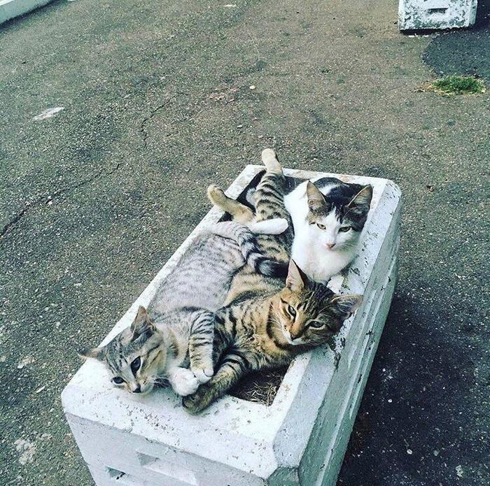 Котоклумба