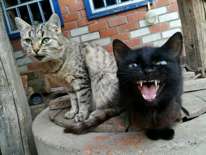 Это фото выглядит так Котомафия, Олдскул, Hip-Hop, Photoshop, Кот