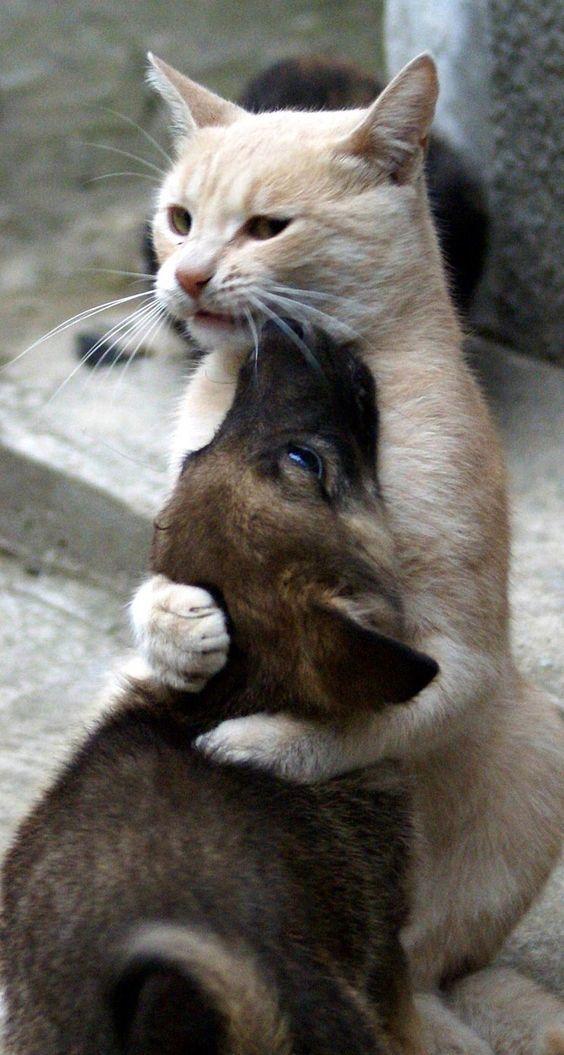 Кто обидел? Иди обниму!