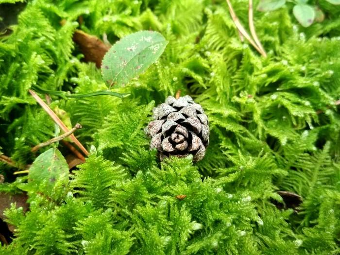 Красивого белорусского леса вам в ленту Лес, Красота природы, Красота, Грибы, Шишки, Природа, Длиннопост