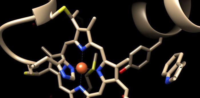 Нобелевская премия по химии 2018 – за использование эволюционного подхода в создании белков с заданными свойствами Белковая инженерия, Направленная эволюция ферменто, Фаговый дисплей, Нобелевская премия, Длиннопост