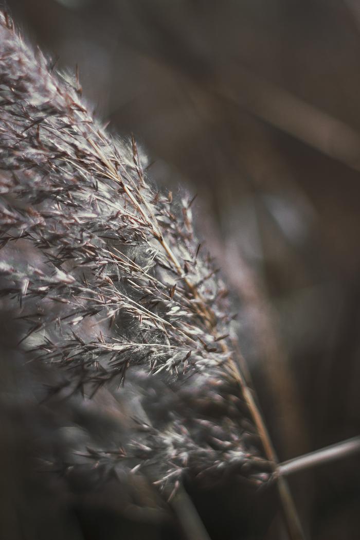 Травки пост) Красота природы, Фотография, Растения, Полевы, Длиннопост