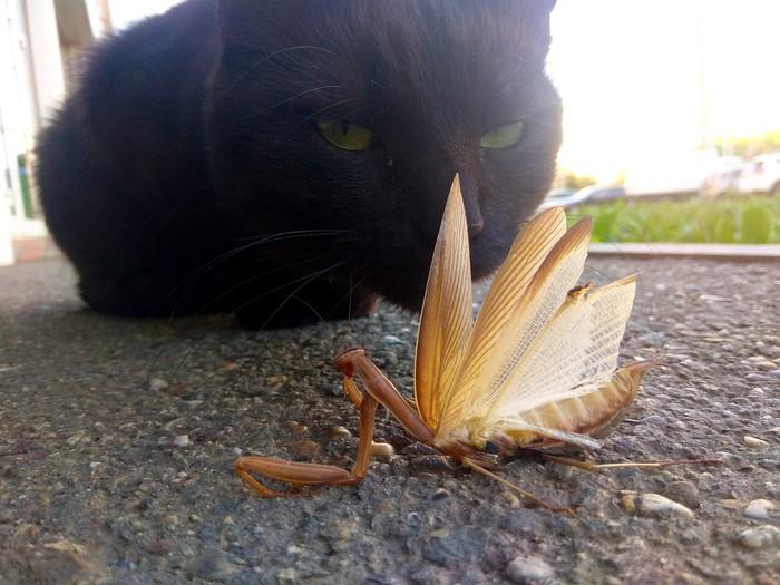Коты улиц