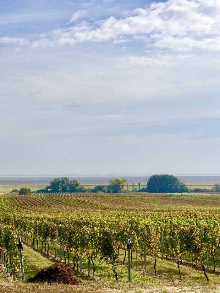 Прогулка по виноградникам. Руст, Бургенланд. Австрия Австрия, Виноградник, Осень, Длиннопост, Фотография