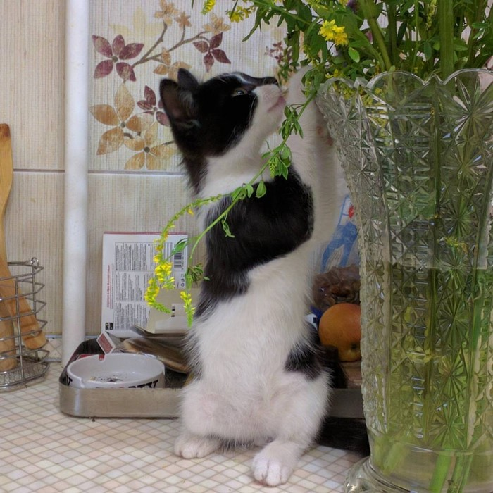 Кот-социопат и рыжий Кот, Тогда и сейчас, Длиннопост