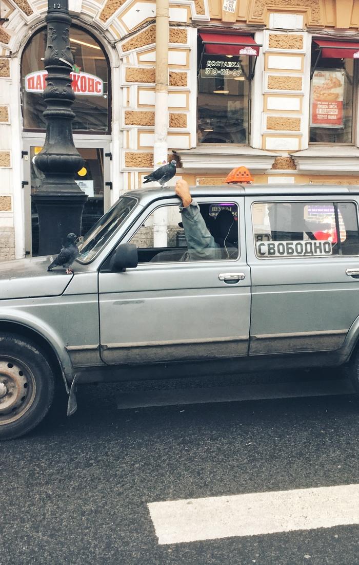 Пятничная питерская нирвана Такси, Пешеходный переход, Голубь, Одиночество, Фотография