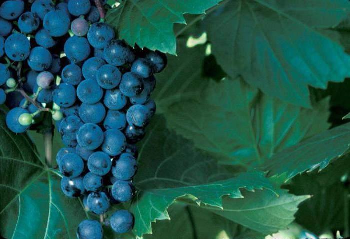 Осторожное касание винной тематики Домашнее вино, Вино, Алкоголь, Длиннопост
