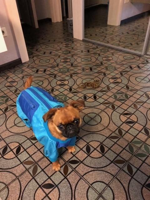 """Собака и комбез (по мотивам басни """"Мартышка и очки"""") Собака, Глупые вопросы, Видео, Длиннопост"""