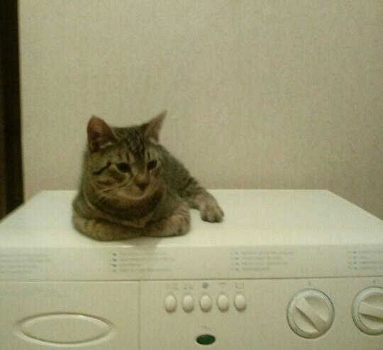 Кот по имени Сиропчик Кот, Было-Стало, Вырос