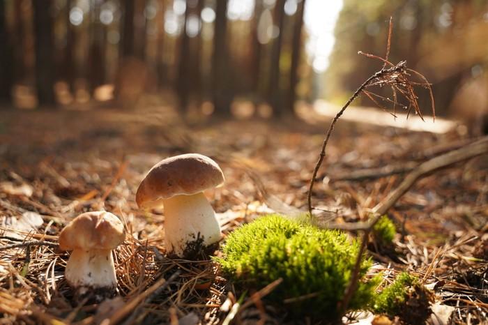 Ароматный суп из белых грибов Суп, Длиннопост, Горячее, Блюдо, Рецепт, Белый гриб, Кулинария, Видео