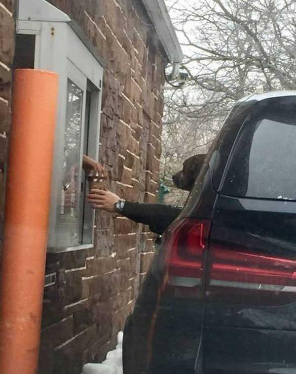 Хороший мальчик покупает кофе своему человеку.