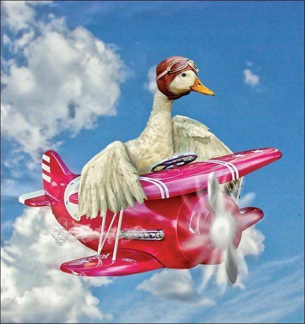 Интересный фотошоп Animal tuning, Photoshop, Длиннопост