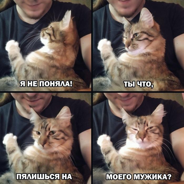 Кошка ревнуля)