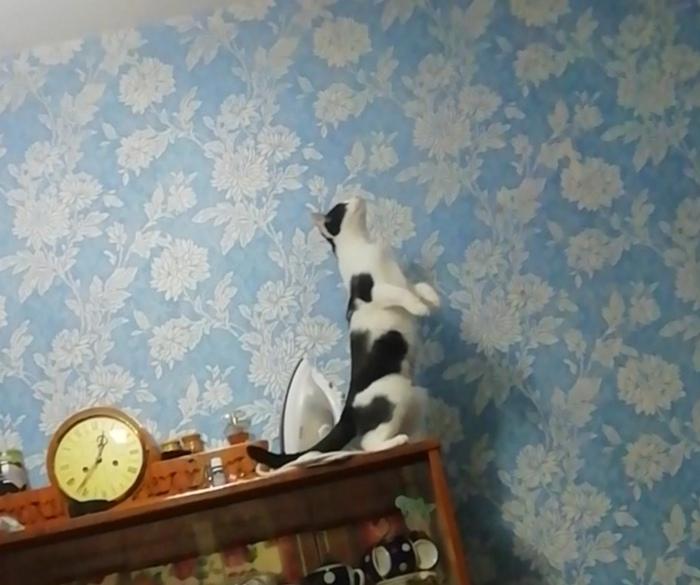 3 секунды до... Кот, Соседи, Съемная квартира
