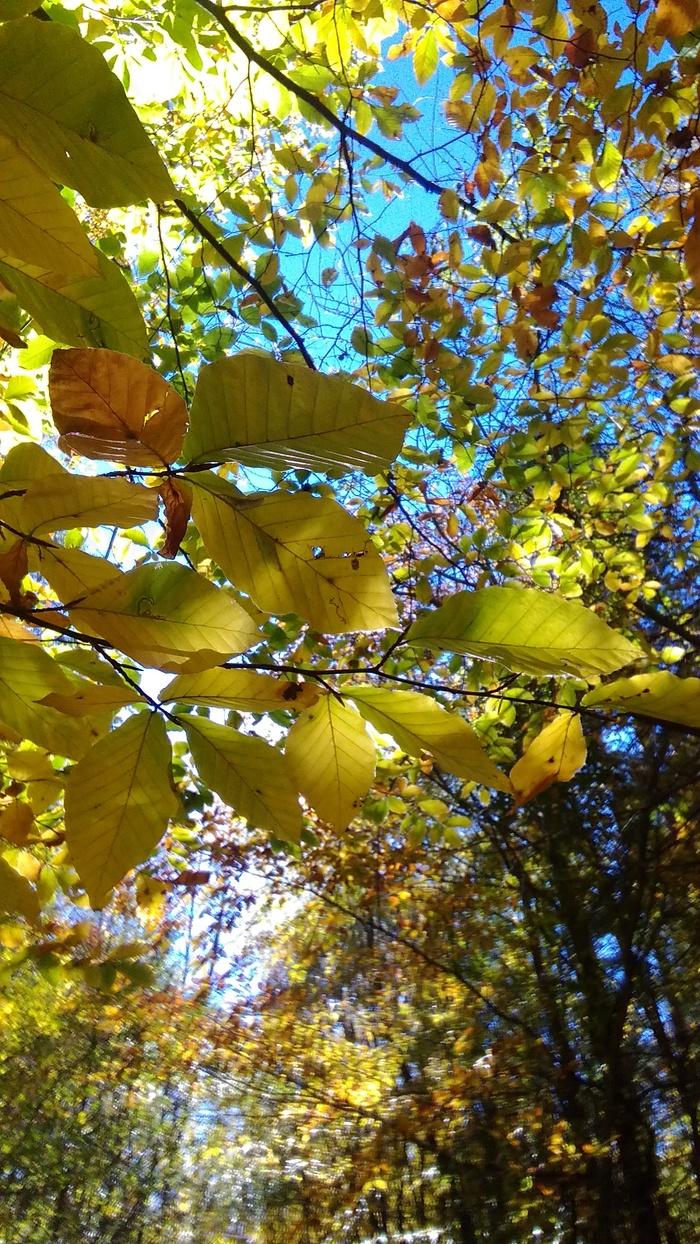 Краски осени в Краснодарском  крае. Осень, Лес, Фотография, Длиннопост