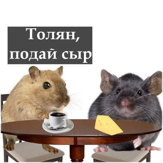 За столиком Мышь, Кот, Игра слов, Картинки, Длиннопост