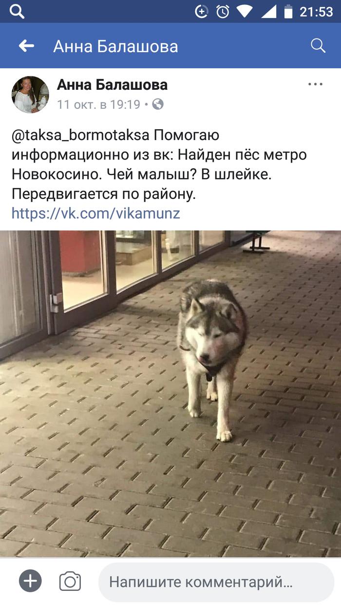 Найдена собака. Москва.