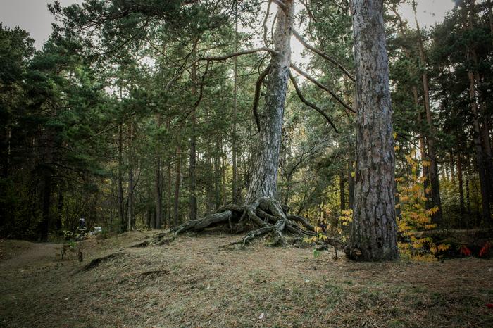 Челябинский бор, осень и тепло Фотография, Природа, Бор, Челябинск, Начинающий фотограф, Длиннопост
