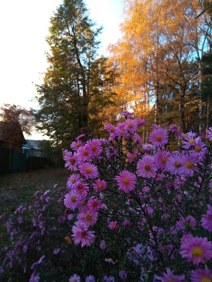 Красивая осень Осень, Красота природы, Природа России, Длиннопост