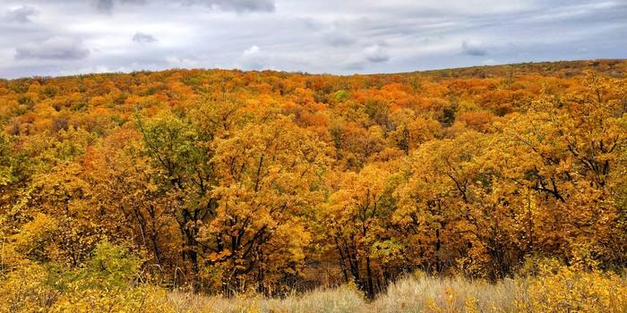 Кумысная поляна Кумысная поляна, Саратов, Дерево, Осень, Листва, Небо, Красота