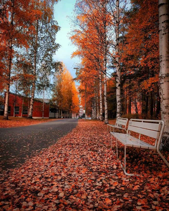 Осень в Оулу, Финляндия. Осень, Фотография, Природа, Красота природы, Красота, Финляндия, Длиннопост