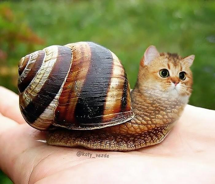 Кототворчество-7 Кототворчество, Кот, Животные, Photoshop, Творчество, Длиннопост