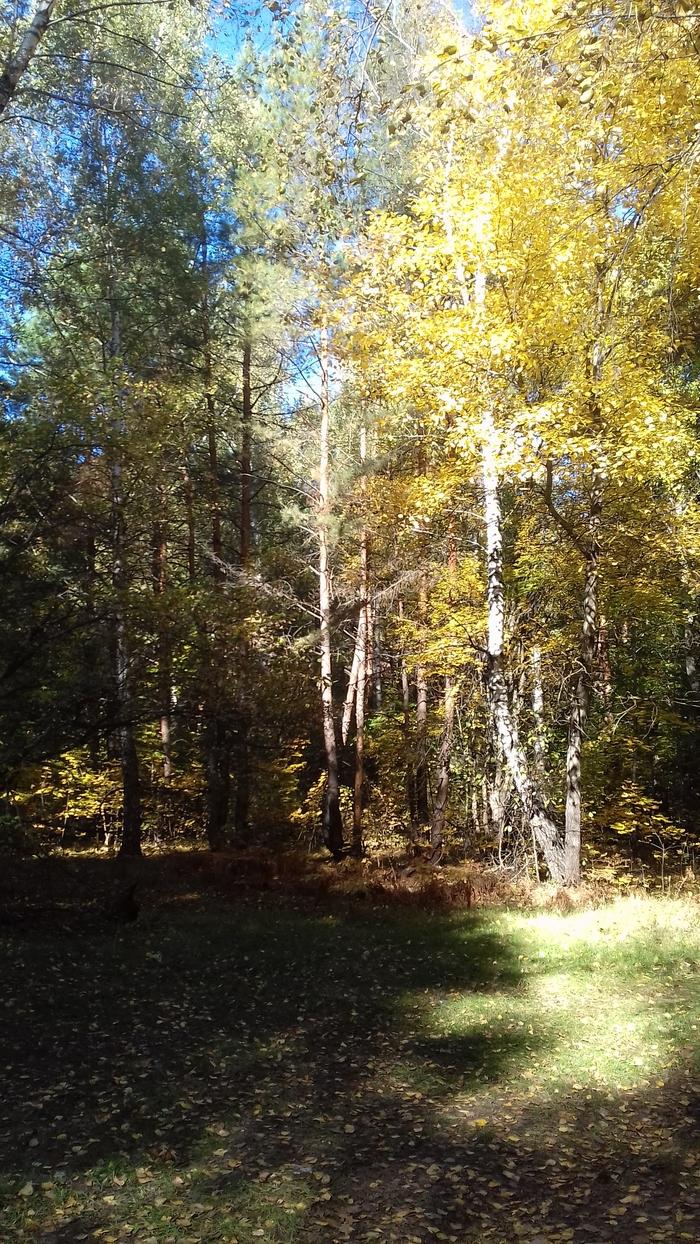 Осень Фотография, Воронеж, Длиннопост, Лес, Осень