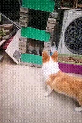 Уйди,пушистая задница!