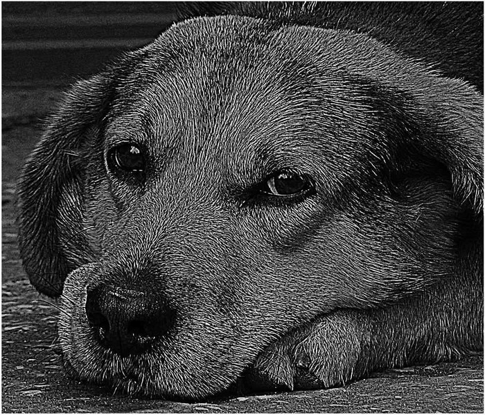 Грусть Собака, Фотография