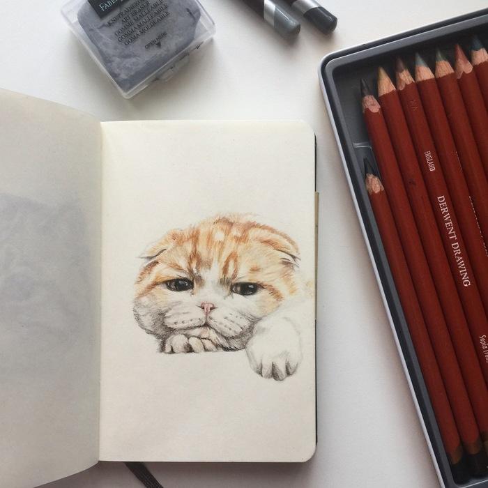 Котики Кот, Арт, Портреты животных, Животные, Анималистика, Рисунок, Цветные карандаши