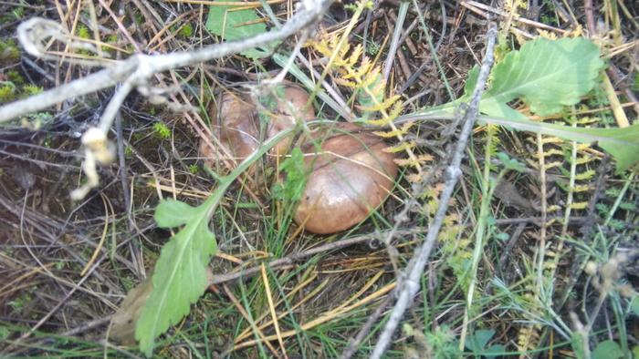 Где грибы? Тихая охота, Грибы, Осень, Белгородская область, Длиннопост