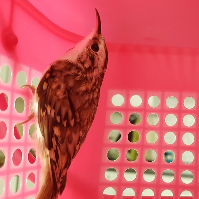 Помогите опознать Что за птица?, Орнитология