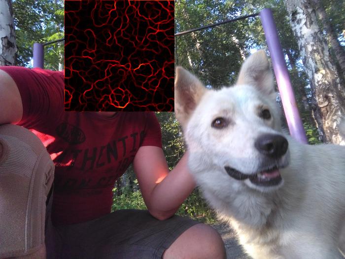 Помогите пристроить собаку. Новосибирск, Пригородная, Собака, Помощь, Длиннопост