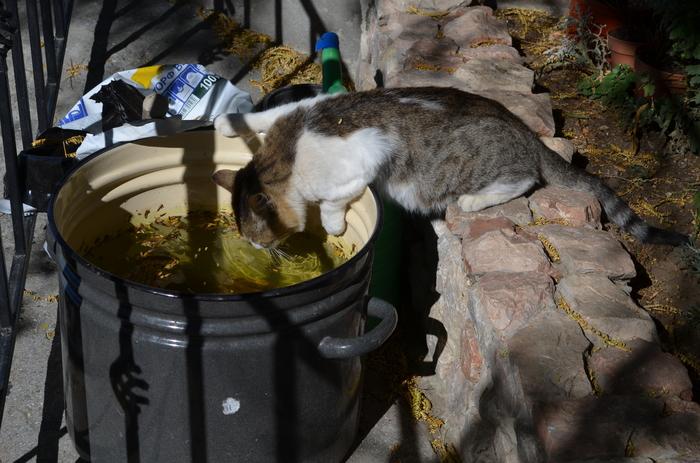 Имидж ничто ... Кот, Вода, Жажда, Фотография, Длиннопост