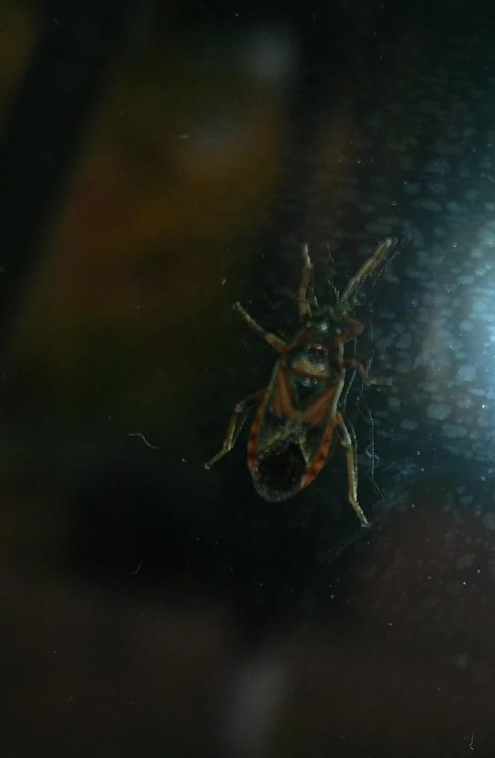 Что за насекомое? Насекомые, Самара, Кто это?