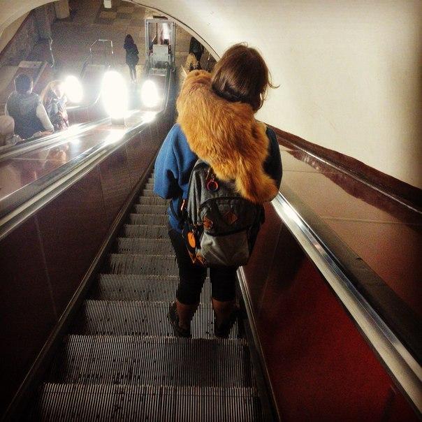 Метрокотики Железная Дорога, Котомафия, Кот, Метро, Московское метро, Длиннопост