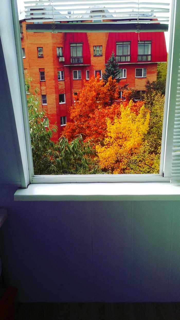 А из нашего окна, осень дивная видна.