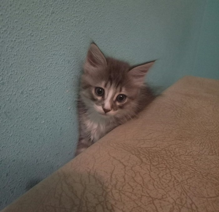 Полгода спустя :3 Кот, Время