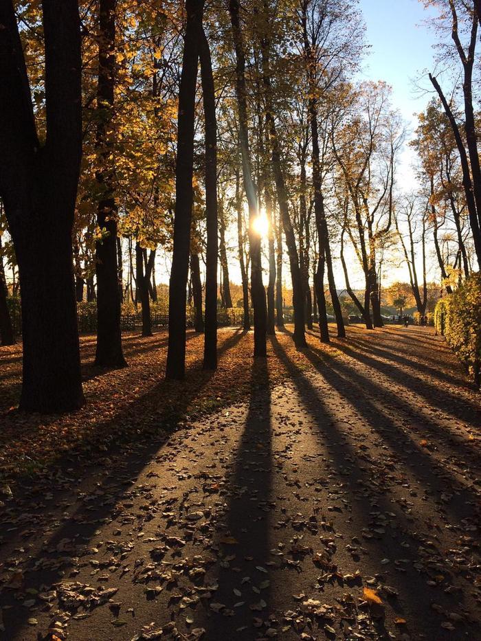 Осень в Петербурге. Осень, Начинающий фотограф, Мобильная фотография, IPhone 5s, Настроение, Санкт-Петербург, Летний сад