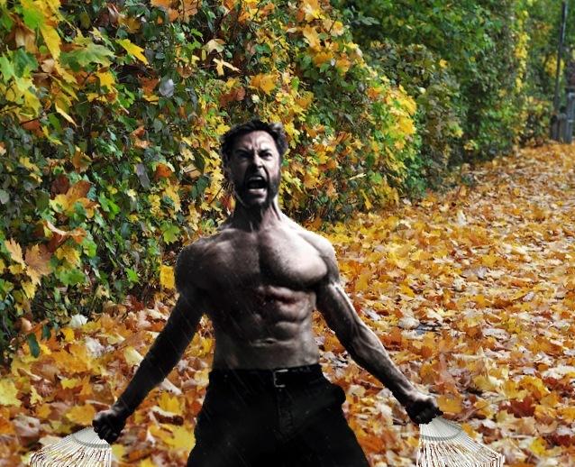 Логан и листья...