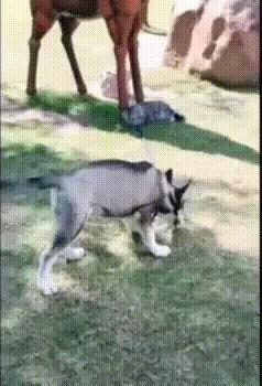 Я тебя не отпускал!