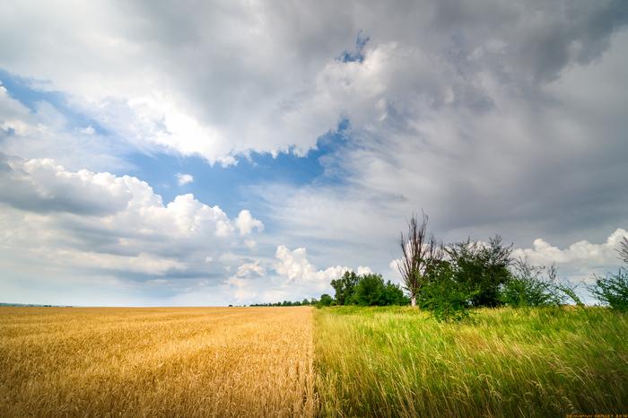 Перед летним дождем) Лето, Пейзаж, Симметрия, Фотография, Настроение, Объем, Просторы, Поле