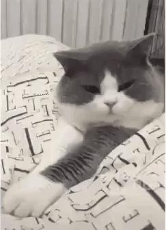 Жлобский котик. Дай лапу - не дам.
