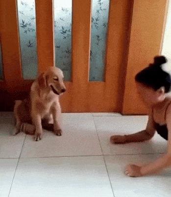 Нелегко быть собакой азиата