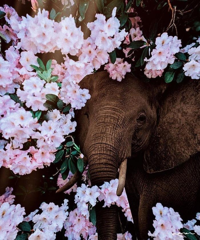 Красочный пост милоты Животные, Милота, Обработка, Природа, Длиннопост